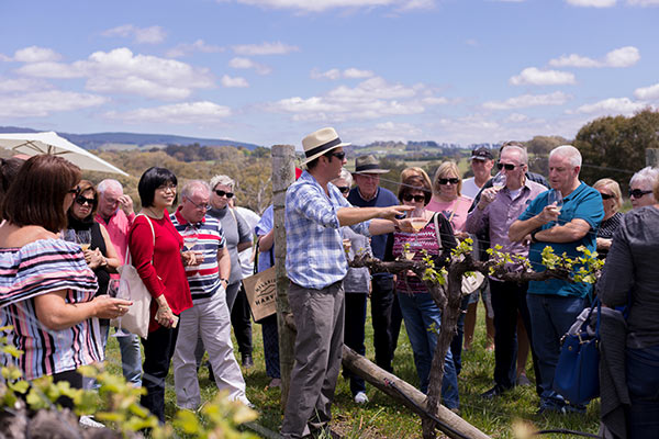 The Vino Express | Swinging Bridge in the vines with Tom Ward
